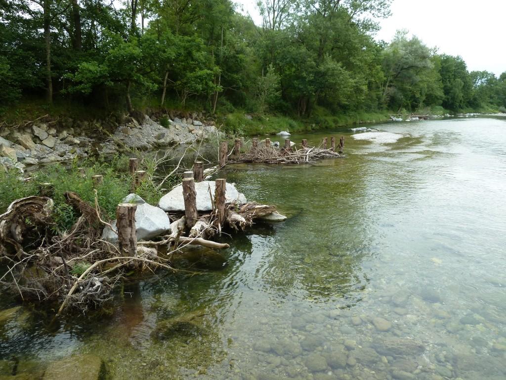 Der Verein Naturnahe Alz fördert in diesem Jahr Strukturmaßnahmen zur Alz-Renaturierung zwischen Hirten und Garching sowie Emmerting und Burgkirchen. Die Umsetzung erfolgt durch das Wasserwirtschaftsamt Traunstein.